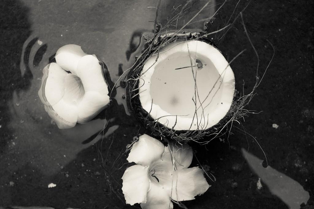 sacred coconut mauritius